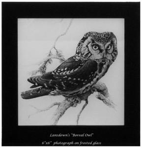 """Lansdown's """"Boreal Owl"""""""